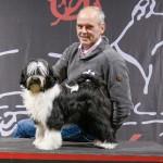 tibetaanse terrier Tibetan Terrier TTCN BTTC Winner Amsterdam
