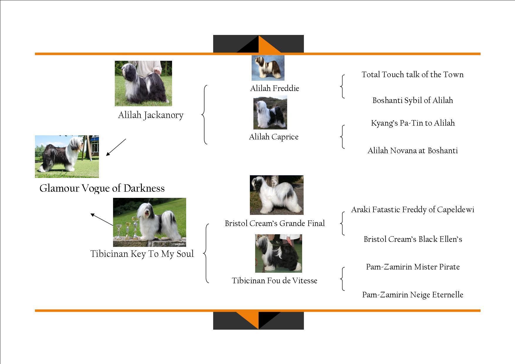 Zippy Tibetan Terrier Tibetaanse Terrier